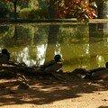 les canards du vésinet