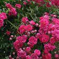 jardins fleuris 2010