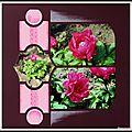 Pairi Daiza 2014 - Les pivoines du <b>Jardin</b> <b>Chinois</b>