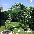 ♥ les rosiers du jardin ; duo autour de l'arche ♥