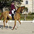Des chevaux du concours du 11 février