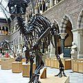 Oxford_MuseumOfNaturalHistory#8