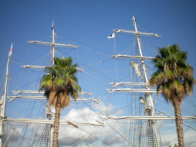Mats et Palmiers sur le port d'Ajaccio