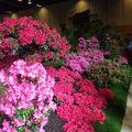 Floralies 062