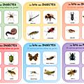 Loto des insectes pour les <b>petits</b>
