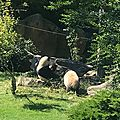 Zoo /PARC de <b>BEAUVAL</b>