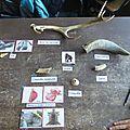 Des archéozoologues en herbe ...