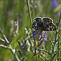 Papillons du <b>Haut</b>-<b>Aragon</b> (2)