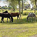 53 - Marcasse - chevaux