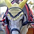 porter le bonnet d'âne