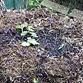 Potager sur tas de compost - Le potager d'un fainéant
