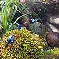 France. Des <b>grenouilles</b> bleues
