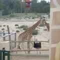 2003-03-22 Les girafes