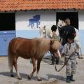 Club poney Rambouillet