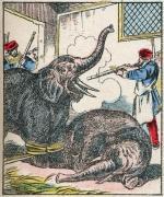 738_elephant