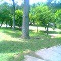 Petit parc