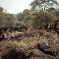 samburu babouin b