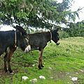 Rando 4 Vers la combe à la chèvre (7)