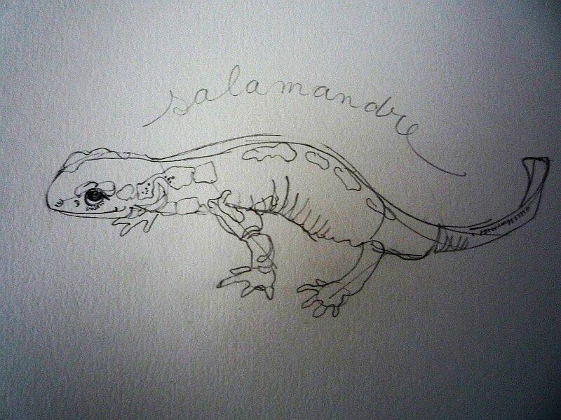 Dans La revue Salamandre