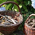 Pêche à pied et petites recettes