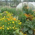 2008 09 03 Les fleurs de mon jardin