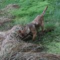 2009 04 13 Kapy au milieu de l'étangs