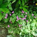 Un dimanche dans mon jardin ensoleillé...