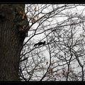 ombre chinoise écureuil