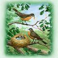 le coin des oiseaux