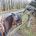 Balade à cheval dans la forêt P1080227