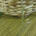 Tresser de la corde avec des orties