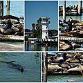 Pier 39 San Francisco Sea Lions 2
