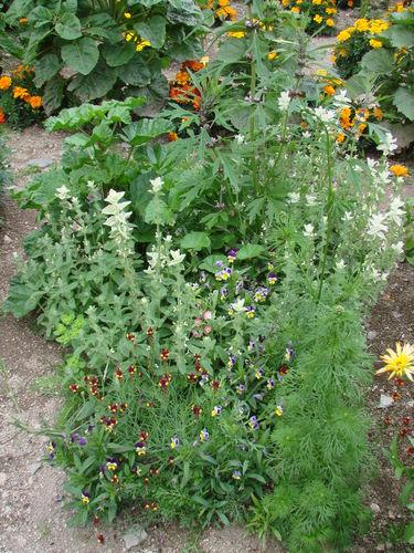 2008 08 19 Mon mélange de fleurs qui attire les papillons