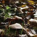 J'aime l'automne!!!