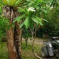 Le jardin de Coco