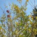 les arbres de la cour 012