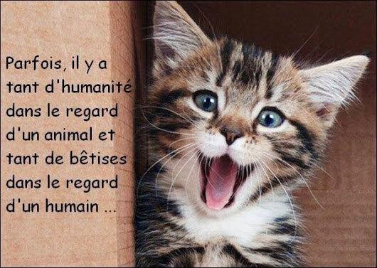 Citation sur l'humanité