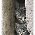 animaux-insolites-chatons-florac-france-1029921028-1082656[1]
