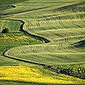 Fiori e grano, Val d'Orcia, Toscane