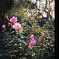 Des fleurs tous les jours