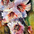 Aquarelle, fleurs, étude 3. 30 x 40.