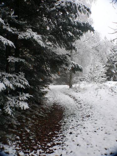 2008 10 29 La neige sur le chemin