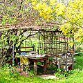 cabane sous les mimosas