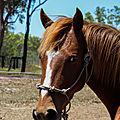 Wild Horse Oz