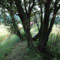 17 Chemin sur talus et chênes, Clansayes