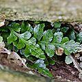Casse-tête végétal