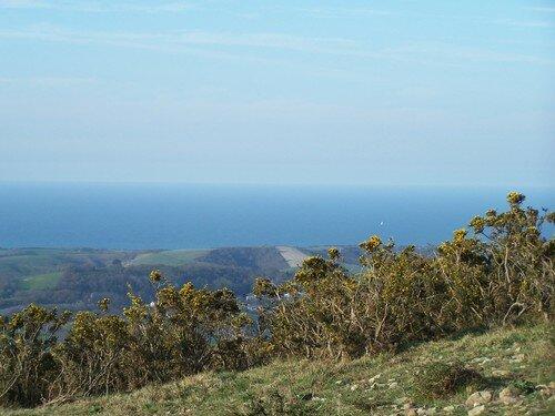 Mont du Calvaire-massif de genets