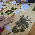 Journée botanique