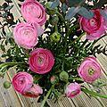 Renoncules roses (14)