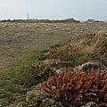 Mon regard sur le <b>Finistère</b> <b>Nord</b>, l'Ile d'Ouessant, haut lieu de la nature en 10 étapes